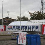 新潟県錦鯉品評会2018